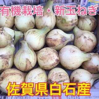 【佐賀県白石産】有機栽培・新玉ねぎ・ペコロスサイズ