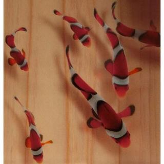 送料0円 アクリルアート  「結」 カクレクマノミ 3D金魚 縁起物(絵画/タペストリー)