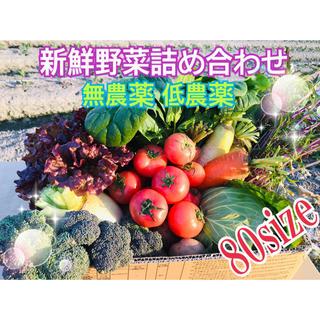 新鮮野菜 野菜詰め合わせ  無農薬 低農薬