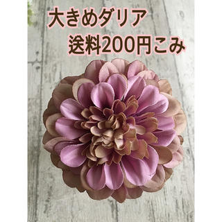 大きめダリア パープル系ピンク色(その他)