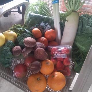 農産物10品