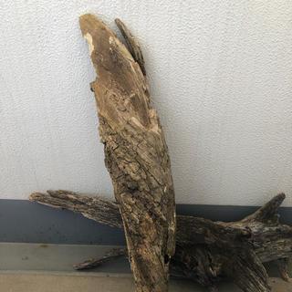 大型流木76×11×10-2.1kg(爬虫類/両生類用品)