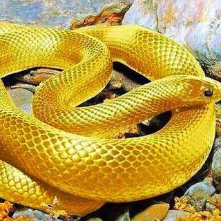 ★女性人気☆早い者勝ち❣️  開運up‼️ 蛇の脱け殻(爬虫類/両生類用品)