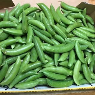 スナップえんどう  1kg強  無農薬野菜 (ガクなし)