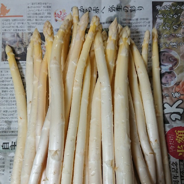 (限定増量!)佐賀県産ホワイトアスパラ1.8キロ(訳あり) 食品/飲料/酒の食品(野菜)の商品写真