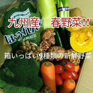 美味しい九州産✨80サイズ新鮮春野菜9種類を箱いっぱい詰め合わせセット✨