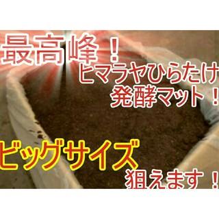 200リットル 幼虫が巨大化!ヒマラヤひらたけ発酵マット カブト、クワガタ兼用!(虫類)
