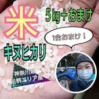 【神奈川県より農家直送!】米 キヌヒカリ 5kg+1合おまけ!(米/穀物)