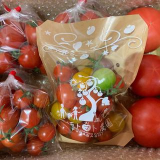 <関東限定>三須トマト農園 全種類詰込みBOX1.8kg(野菜)