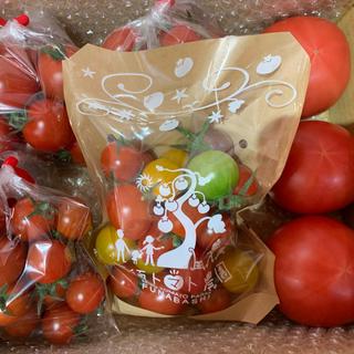 三須トマト農園 全種類詰込みBOX1.8kg(野菜)