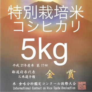 栃木県産 農家直送 新米コシヒカリ5kg