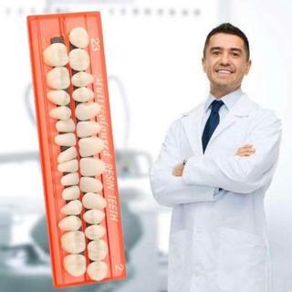 歯の抜け歯、歯の欠損修復キット上下28ピースセット 応急処置 緊急修復(その他)