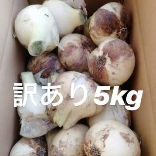 ★期間限定★淡路島新玉ねぎ 訳あり5Kg