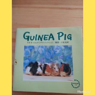 「Guinea pig : モルモット&チンチラコレクション」飼育解説書つき(小動物)