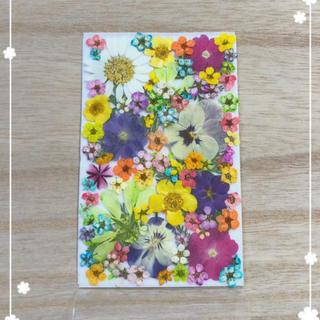 【押し花 素材】カラフルな小花セット230(各種パーツ)
