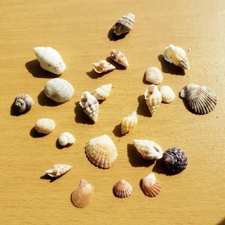 天然貝殻の詰め合わせ(各種パーツ)