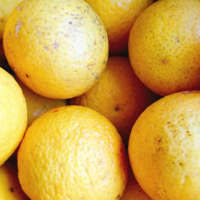 小田原産 湘南ゴールド  2㎏ 産地直送  送料込み 食品/飲料/酒の食品(フルーツ)の商品写真