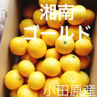 小田原産 湘南ゴールド  2㎏ 産地直送  送料込み(フルーツ)