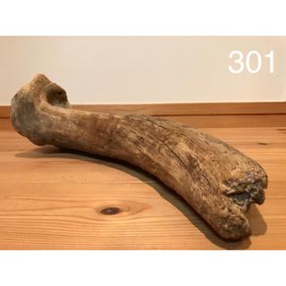 流木【301】(爬虫類/両生類用品)