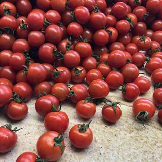 ヘタ付きミニトマト1kg