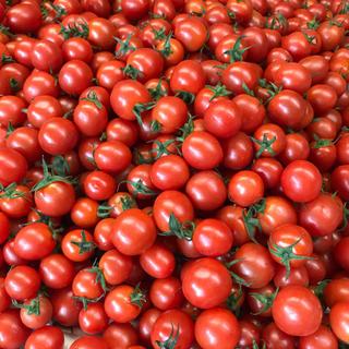 ミニトマト1.5kg