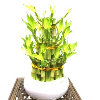 開運竹♡ ミリオンバンブー タワー型3段 陶器鉢付♪(プランター)