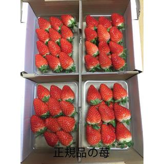 三重県産苺 かおりの正規品8パック