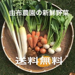 ☆大人気 残りわずか☆ 植え替えの為 野菜詰め合わせ 80サイズ【送料無料】(野菜)