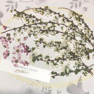 押し花素材セット ユキヤナギ 枝8本プラス10雪柳 No.u2 ドライフラワー(ドライフラワー)
