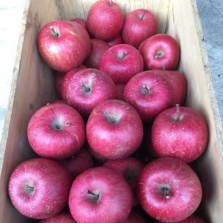 今シーズンまもなく終了!青森県産りんご サンふじ 5キロ