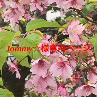 Tommy☆様専用ページ(ドライフラワー)