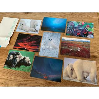 星野道夫 ポストカード 9枚(写真/ポストカード)
