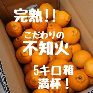 完熟!!不知火(デコポン) 5キロ箱満杯 ご家庭用