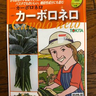 ★送料込★イタリア野菜「カーボロネロ」(黒キャベツ)の種21粒(野菜)