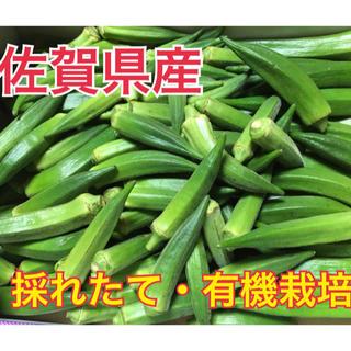 【佐賀県産】有機栽培オクラ