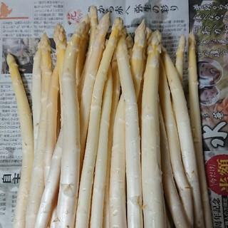 (増量!) 佐賀県産ホワイトアスパラ1.5キロ(訳あり)(野菜)