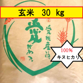 お米 H30 愛媛県産キヌヒカリ 玄米 30㎏