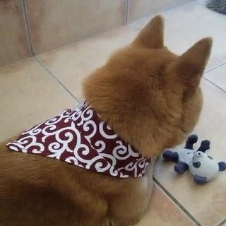 犬用 手作りバンダナ 唐草模様 赤色一点(リード/首輪)