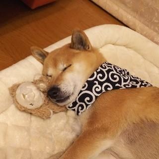 犬用 手作りバンダナ 唐草模様 紺色一点(リード/首輪)