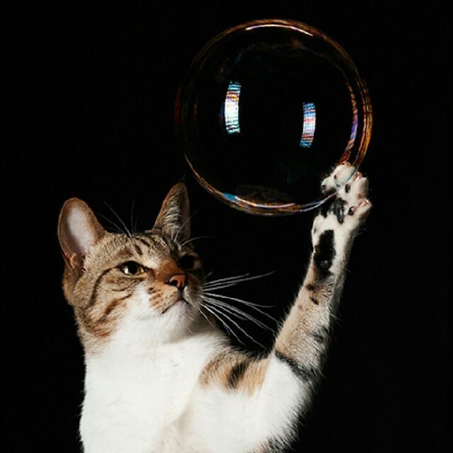 DHC(ディーエイチシー)のあずきち様*専用 その他のペット用品(猫)の商品写真