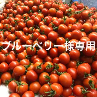 ブルーベリー様専用 ミニトマト1.5kg(野菜)