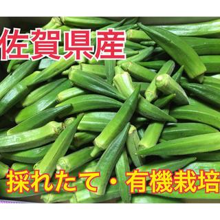 【佐賀県産】朝採り・有機栽培オクラ