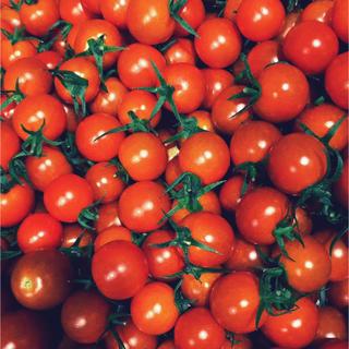 チビミニトマト1kg