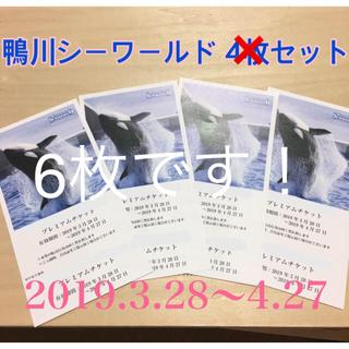 なっち様ご検討中鴨川シーワールド チケット 入場券(水族館)