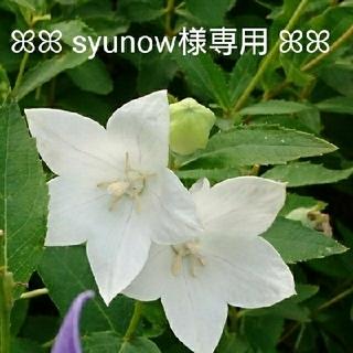 【syunow様専用】☆薔薇のスワッグ セット☆(ドライフラワー)
