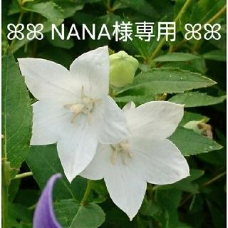 【NANA様専用】☆薔薇のスワッグ セット☆(ドライフラワー)