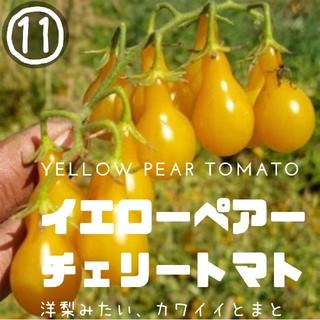 トマト⑪【イエローペアー】 種子20粒 チェリートマト、プチトマト(その他)