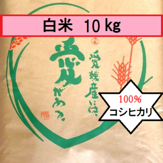 お米 H30 愛媛県産コシヒカリ 白米 10㎏(米/穀物)