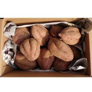 鹿児島県種子島産安納芋L3キロ(約10本)(野菜)
