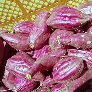 【訳あり】新品種 すずほっくり 泥付き10kg(野菜)